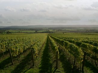 Nyetimber-vineyard,-Sussex