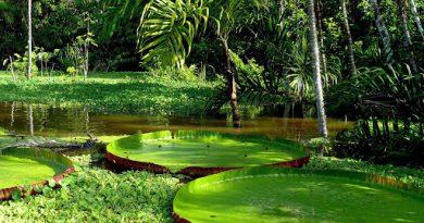 Амазонские леса превратятся в засушливую равнину уже к 2064 году