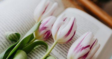 книги и цветы