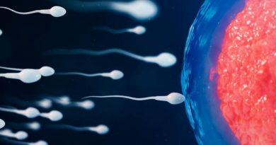 Падение количества сперматозоидов и скромные размеры