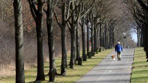 Так сегодня выглядят деревья, посаженные Йозефом Бойсом Кассель, Германия