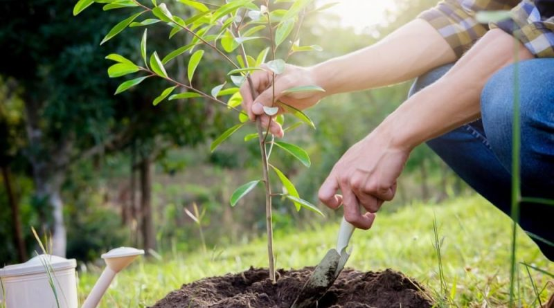 Посади дерево к платиновому юбилею коронации